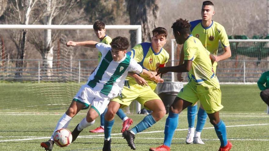 El Córdoba y el Séneca golean en División de Honor