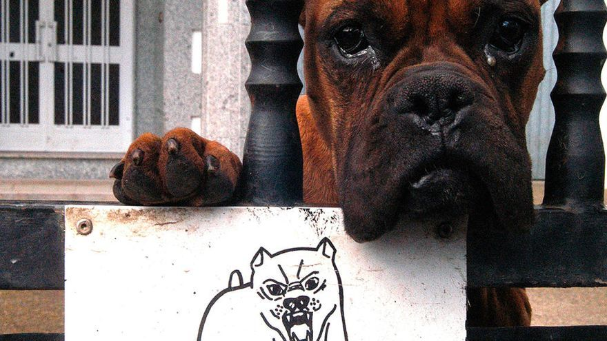 Condenado en Vigo por daño moral a la dueña de una perra que murió por el ataque del suyo