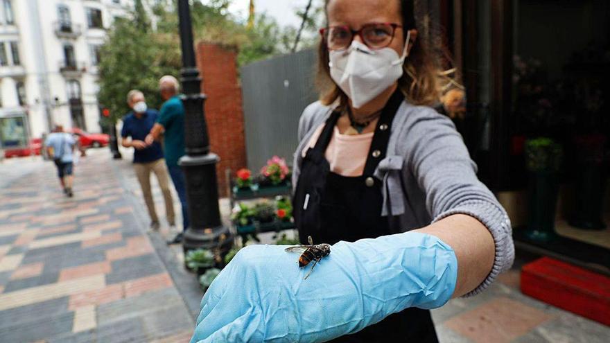 La proliferación de avispas velutinas tiene en vilo a los vecinos y comerciantes de Sabugo