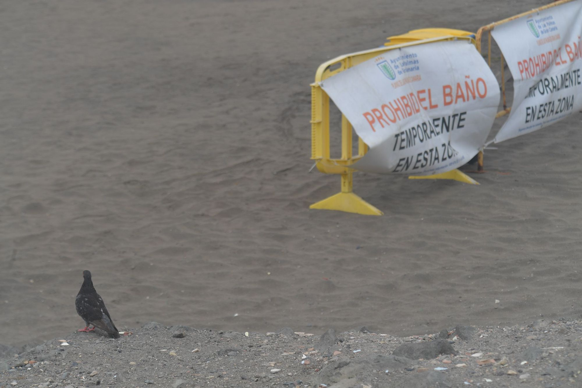 La Playa de La Puntilla sigue cerrada al baño