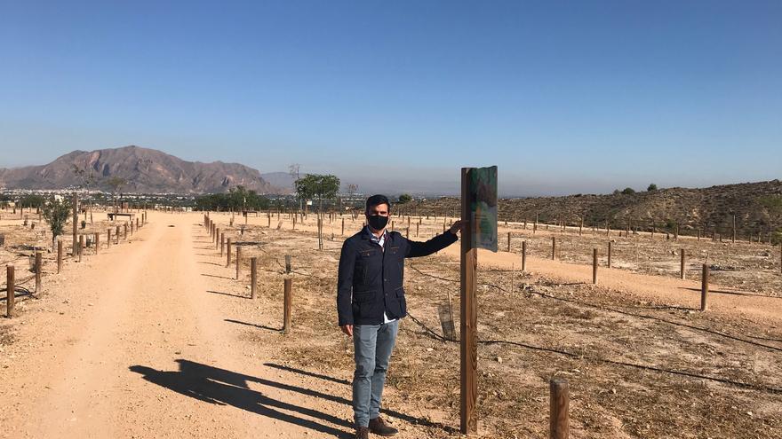 Bigastro recuperará masa forestal en el paraje de La Pedrera