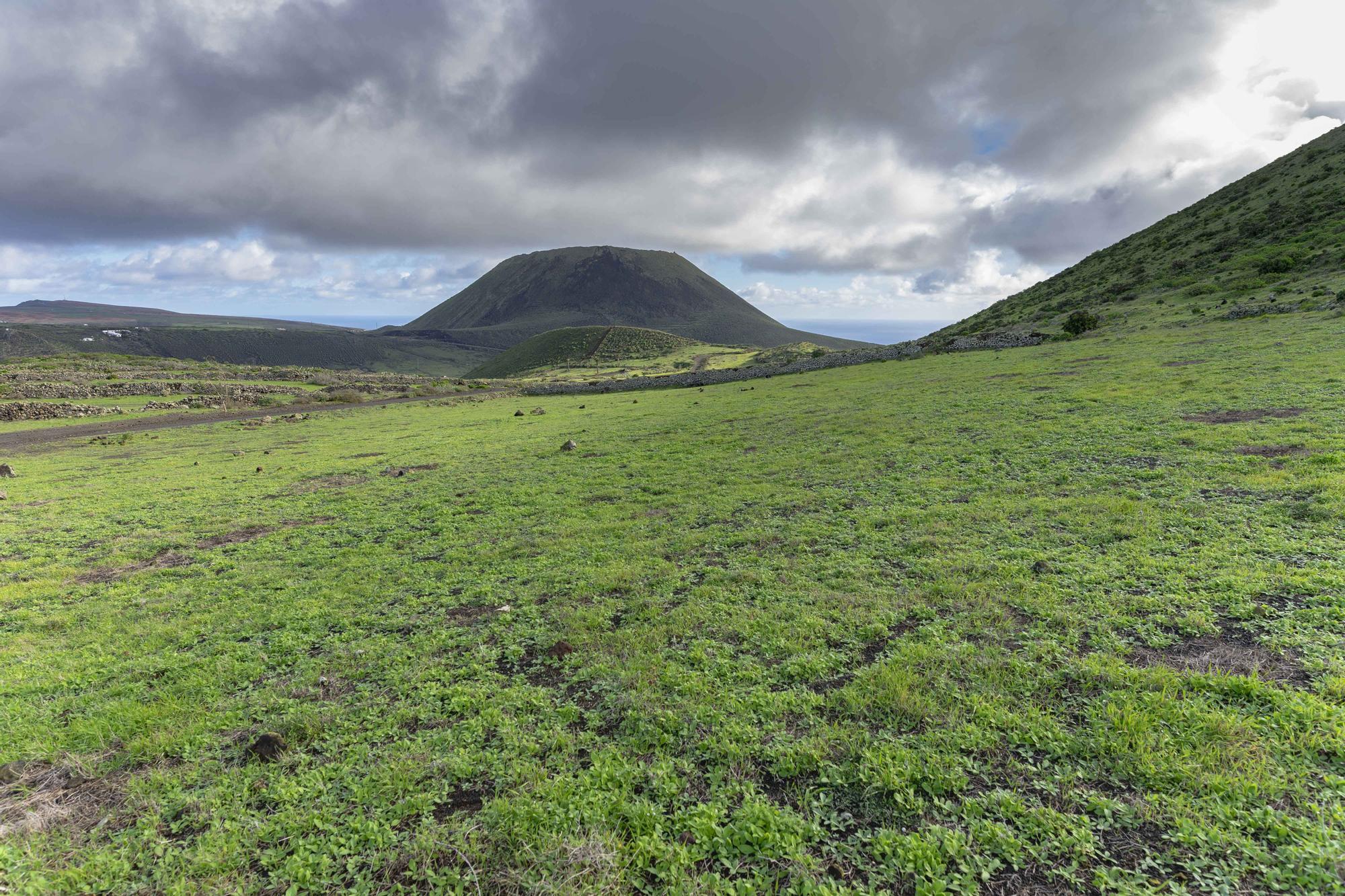 El norte de Lanzarote se tiñe de verde tras las recientes lluvias de este invierno