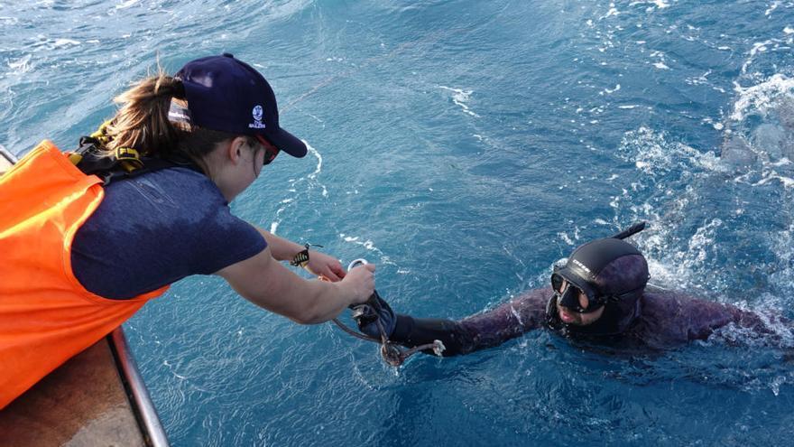 L'acció al fons marí al Port de la Selva recupera 22 nanses de pesca, ploms i xarxes