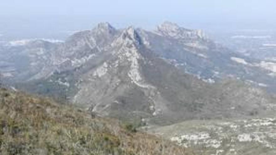 Rescatan a un búho real en Alzira
