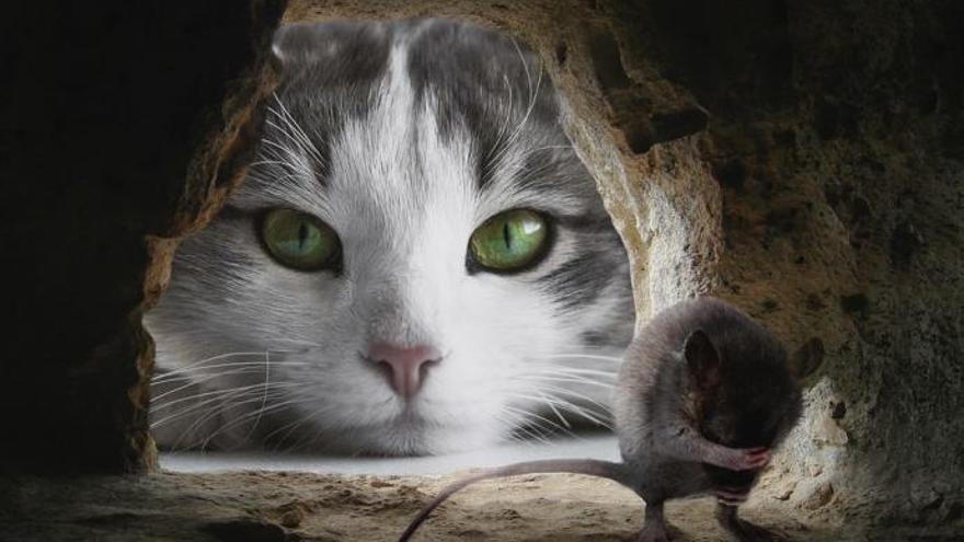 Mi gato y su ratón favorito