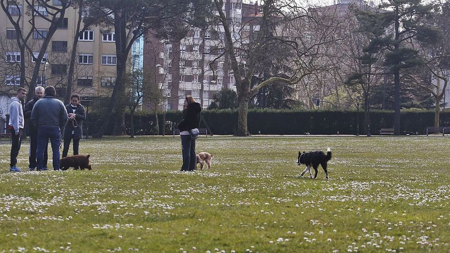 La elección del suelo para el albergue de animales se conocerá antes de verano