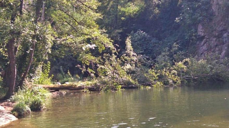 La caiguda d'un arbre de més de vint metres fa tancar un gorg de les Planes
