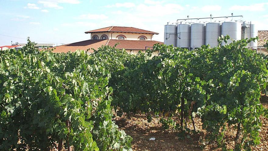 Los viticultores de Toro podrán acceder a ayudas para reestructurar viñedos