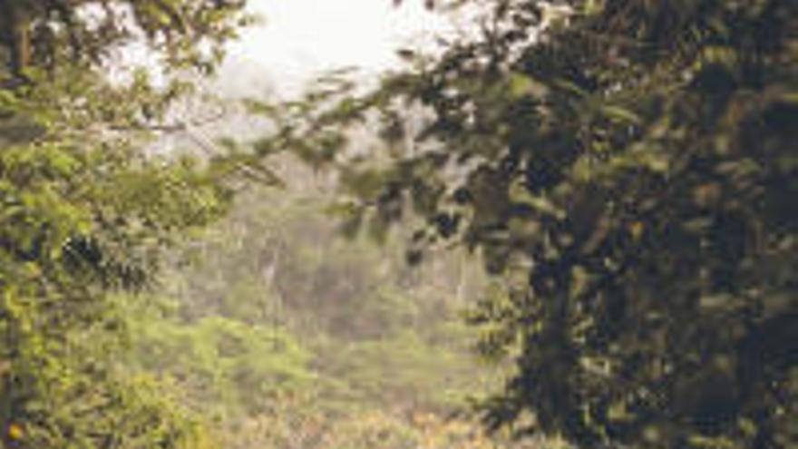 Un bosque que es una mina