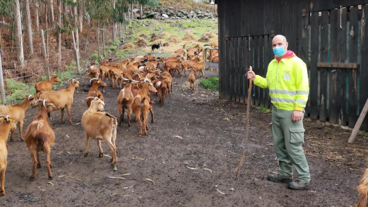 El capataz de la Comunidad de Montes de Meira, Sergio Chapela, con las cabras por el monte