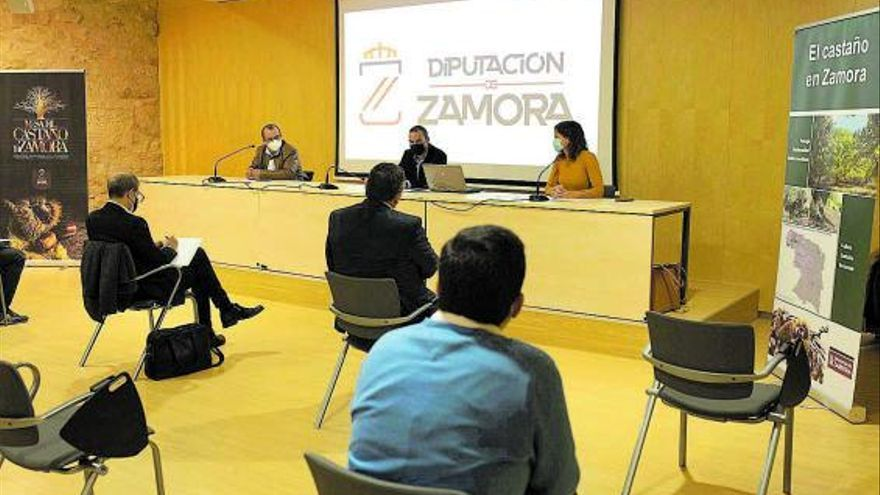 Nace la Mesa del Castaño de Zamora para profesionalizar a un sector en crisis