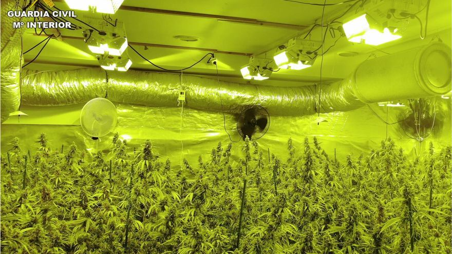 Seis detenidos con 1.500 plantas de marihuana en El Campello, La Nucía y Benidorm