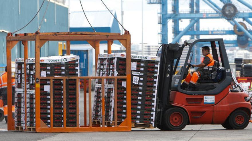 Los incumplimientos de MSC ponen al límite la exportación de tomate canario