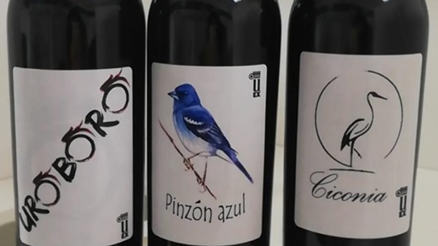 Tres vinos elaborados por estudiantes de la UEx consiguen las medallas Gran Oro y Oro en VinEspaña