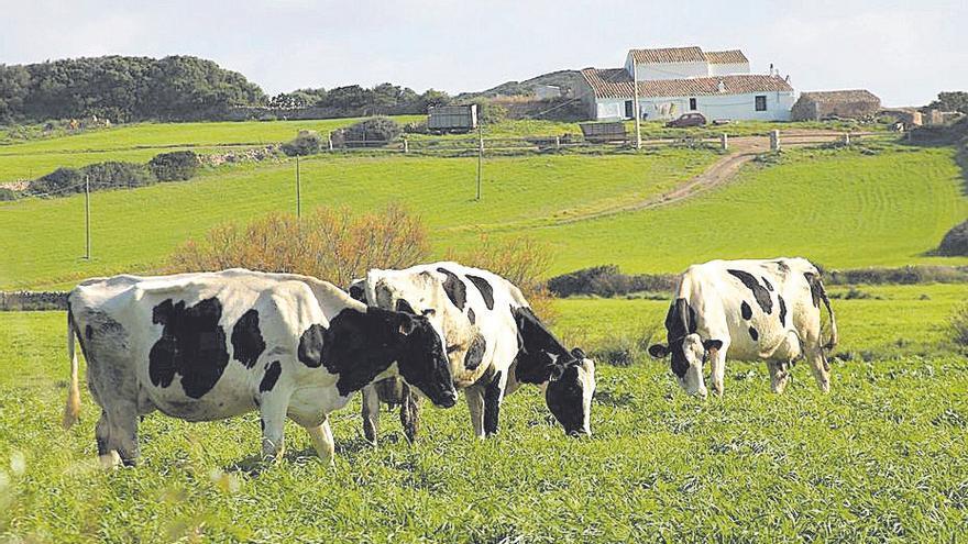 Agricultura: Ayudas para la recría de ganado vacuno