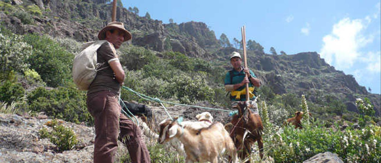 Ingenieros forestales defienden el uso de rifles contra los animales silvestres