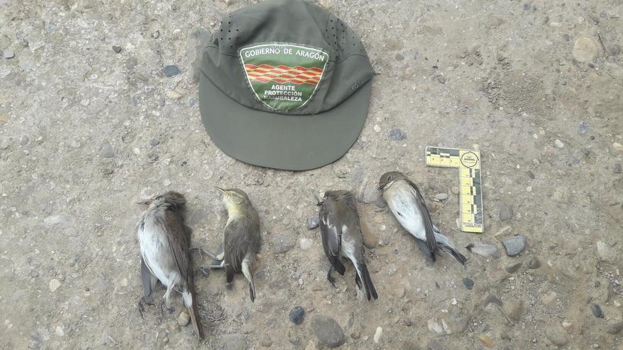 Agricultura denuncia la captura de aves protegidas con cepos en el Moncayo