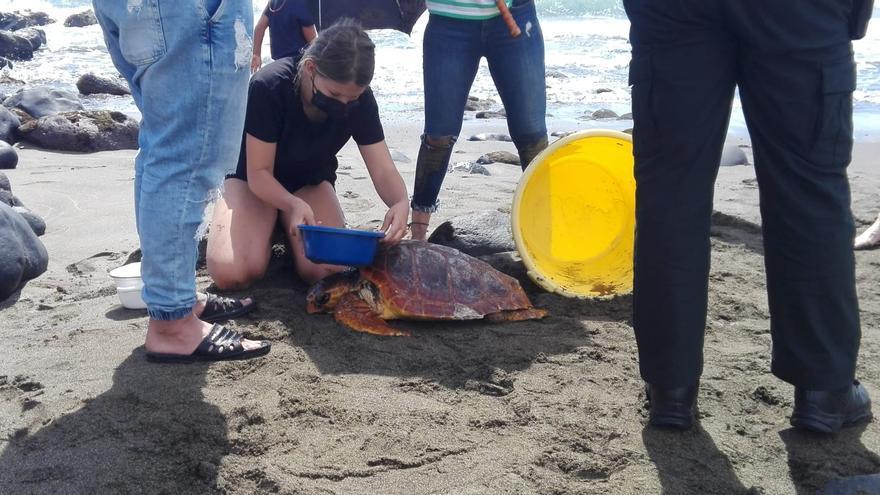 Rescate de una tortuga atrapada en una red en El Burrero
