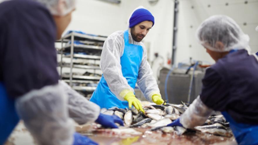 El sector industrial de alimentación es uno de los que más puestos de trabajo genera este verano en Galicia
