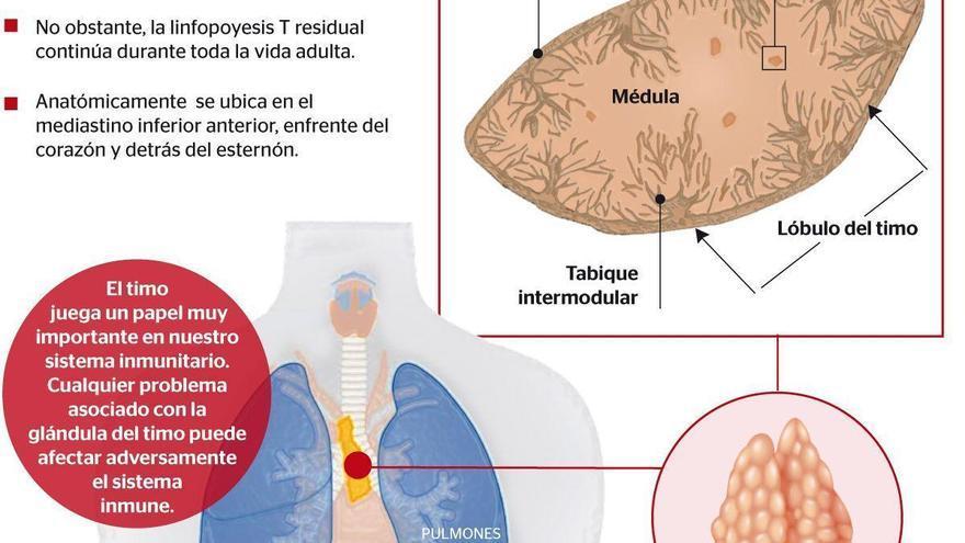 El timo, la glándula de la salud y de la inmunidad