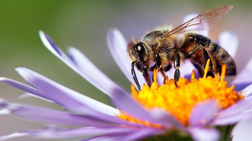 El primer mapa mundial que revela dónde viven las abejas