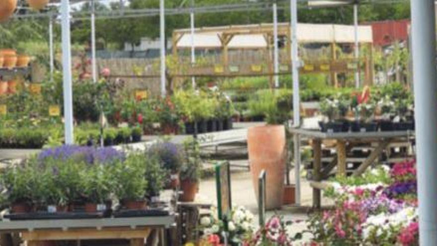 Gärtnereien auf Mallorca: zu Besuch bei Plantes Inca
