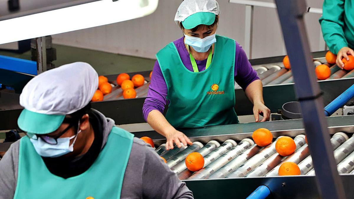 Las ayudas pretenden que las cooperativas andaluzas ganen en dimensión y competitividad.