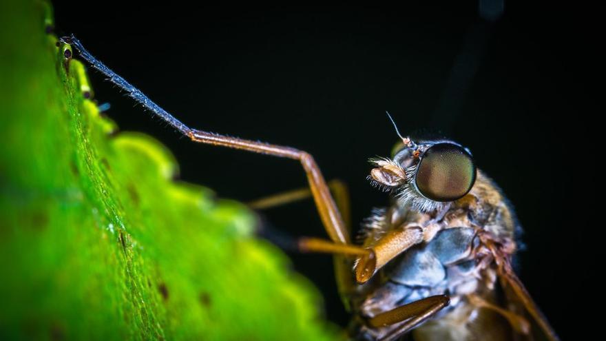 La planta que acabará con los mosquitos de tu casa de una vez por todas