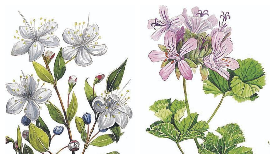 Plantes aromàtiques: Els materials arriben als ajuntaments