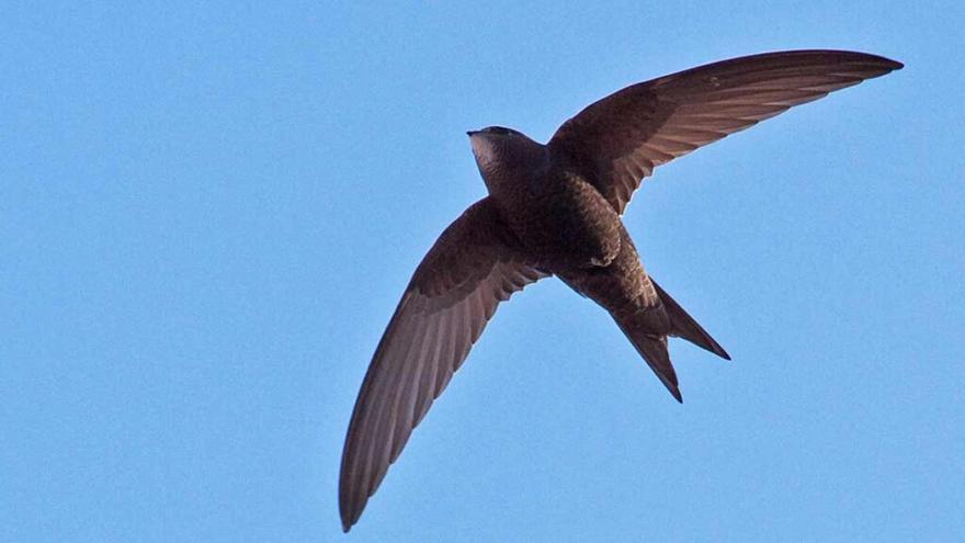Ecologistas en Acción denuncia el derribo de nidos de aves protegidas