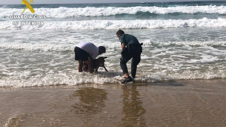 Perros deshidratados rescatados en Fuerteventura en plena ola de calor
