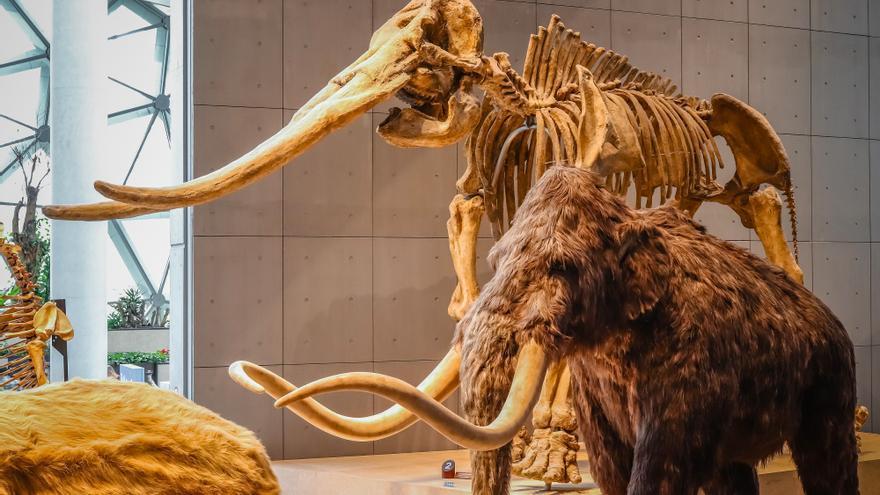 Encuentran en Tarragona costillas de mamut y herramientas de sílex de hace un millón de años