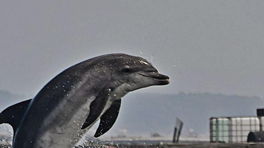 Los científicos identifican un espacio propenso a las visitas del delfín común