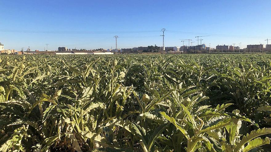 Las heladas en el campo provocan pérdidas de  casi 10 millones de euros