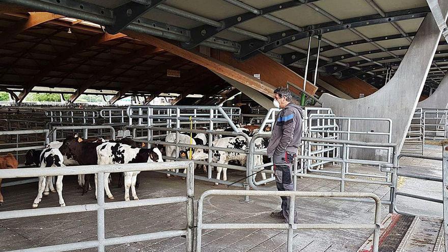 Crisis en la ganadería con la caída de las ventas al exterior del mercado de Siero