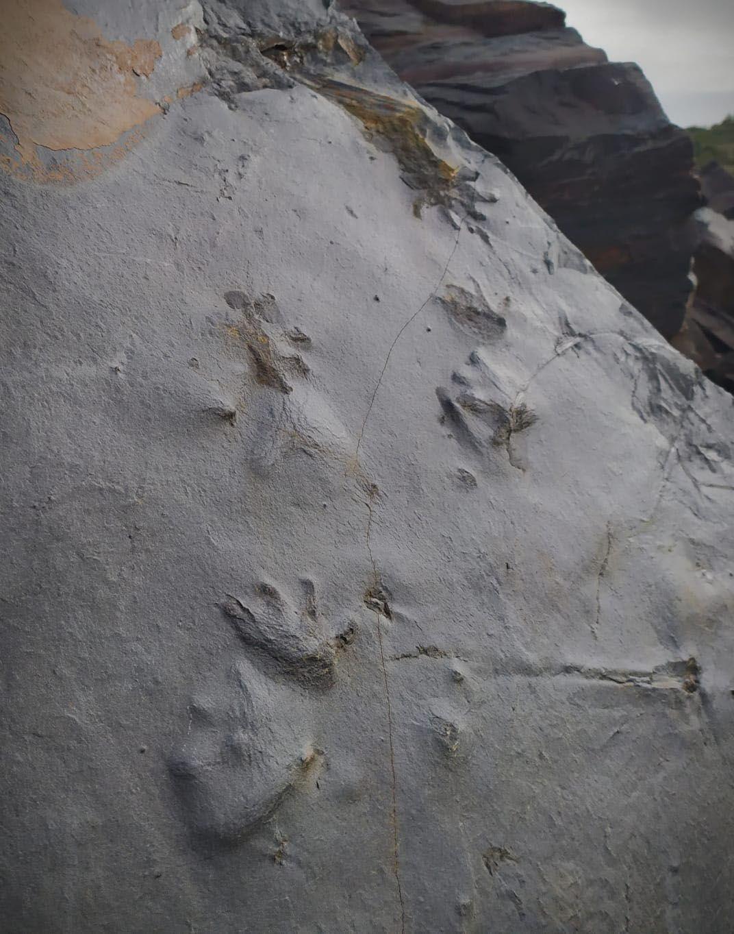 Localizan en la Gran Corta de Fabero (León) una huella de un anfibio de hace 300 millones de años