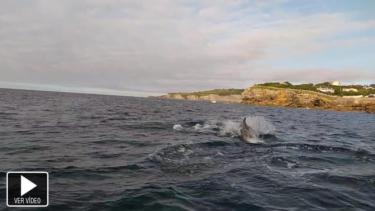 Delfines en San Lorenzo
