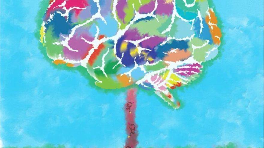 La hormona de la felicidad impulsa el crecimiento del cerebro
