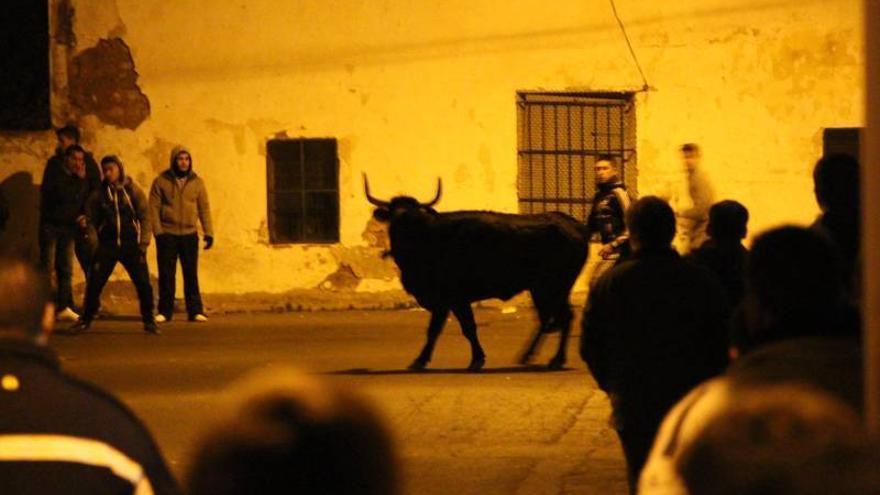 La capital defiende el 'bou' a pie de barrio del Rosario