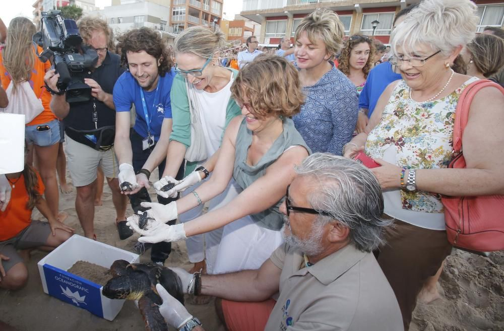 Suelta de 32 crías de tortuga boba en Sueca