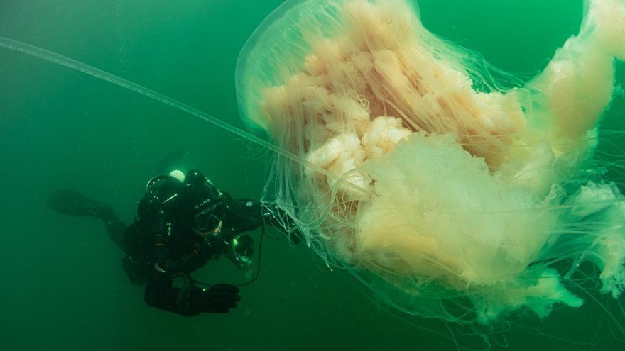 Así fue el encuentro con una medusa gigante en la ría de Vigo
