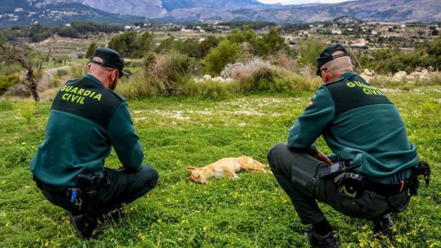 Mueren envenenados al menos 12 perros de los 18 que ya se han intoxicado en Valencia
