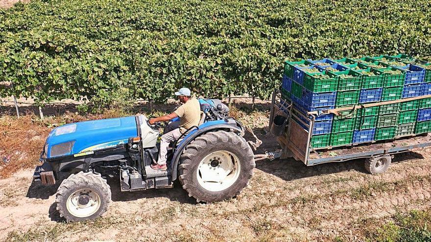 """Un precio de la uva """"por debajo de los costes de producción"""" enfrenta a viticultores y bodegas"""