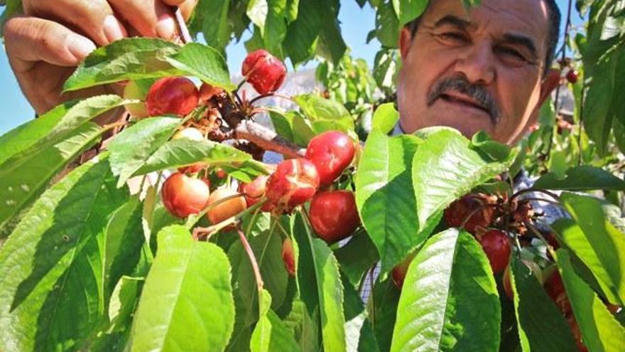 Extremadura aseguró 1.135 millones de euros en pólizas agrarias durante  2020