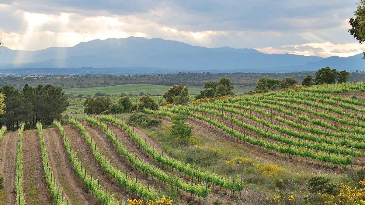 Les vinyes del celler Mas Llunes s'han convertit en ecològiques