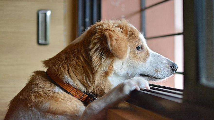 Los perros y los gatos también se deprimen