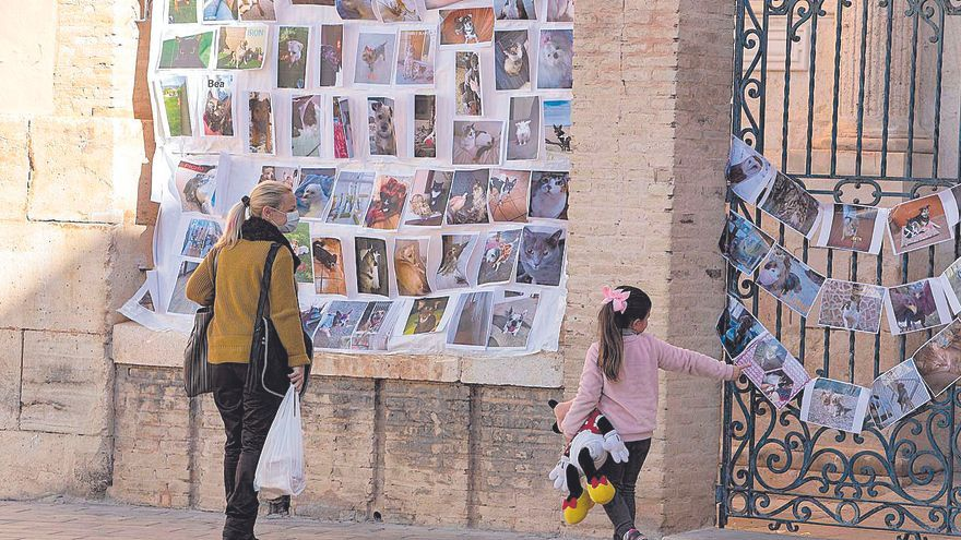 Los vecinos de Canals colocan fotos de sus mascotas para su bendición por Sant Antoni
