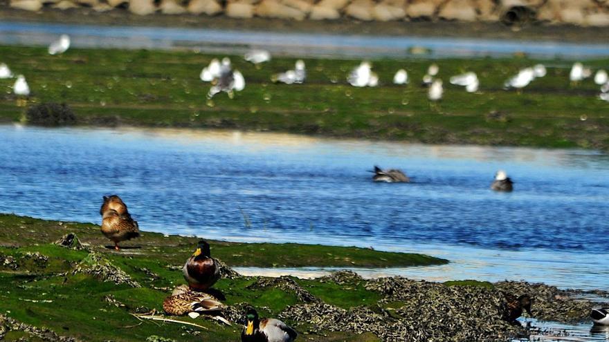 ¿Volverá la alerta por gripe aviar con la migración otoñal?