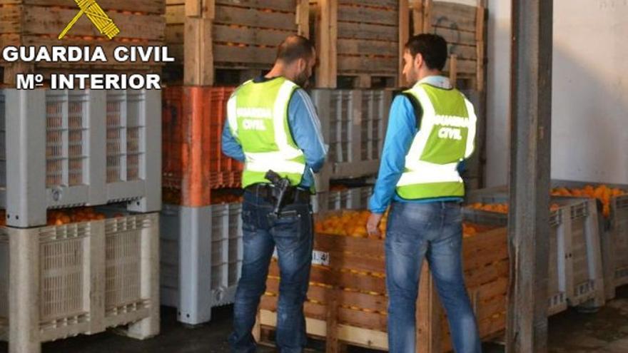 Investigadas 29 personas por robo de 125.000 kilos de cítricos y 163.000 kilos de caquis