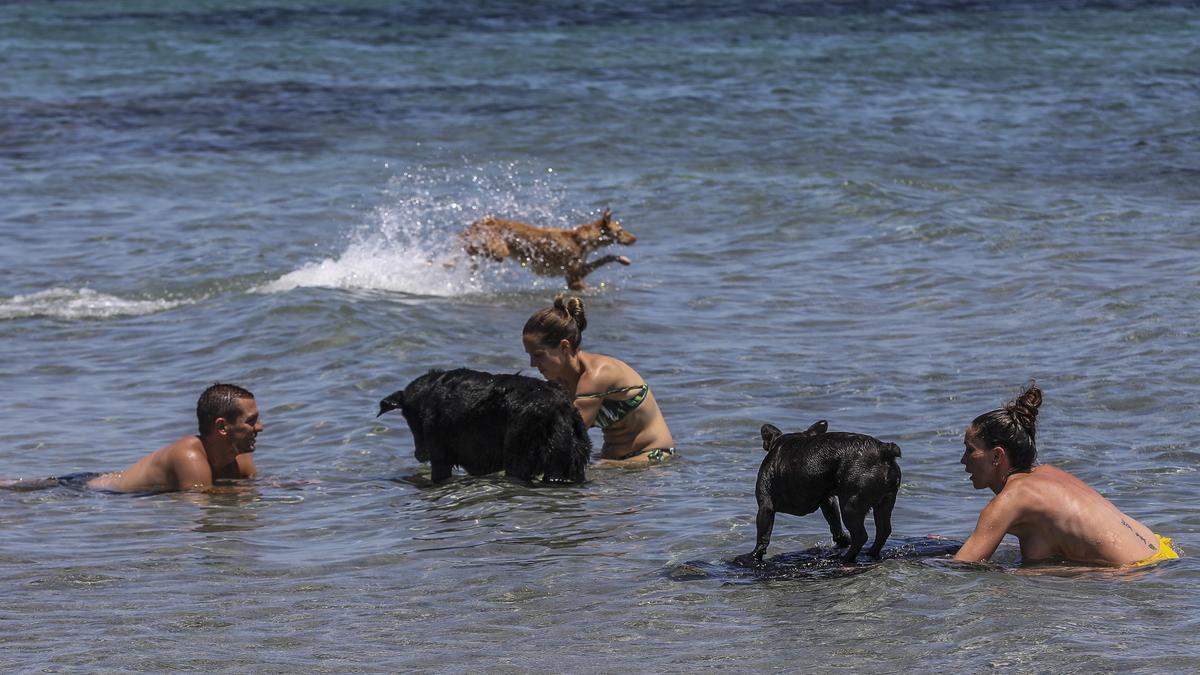 Cala dels gossets de Santa Pola: una playa con instinto animal